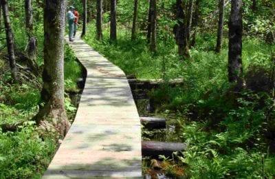 Trail crossing a boardwalk in wetland