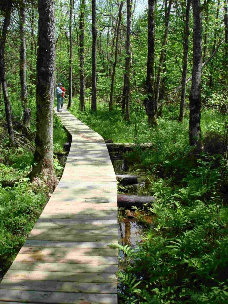 Trail crossing a boardwalk in wetland